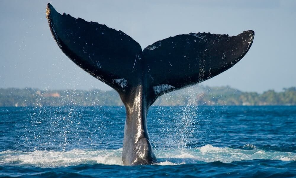 whale_biggest_account_holder
